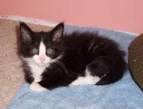 about-us-kitten
