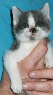 recue-kittens-durante