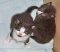 rescue-kittens-cubby-karen