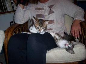 tlk-dee-kittens