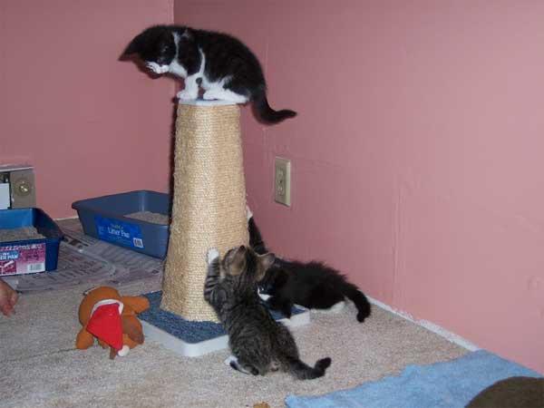 tlk-kittens